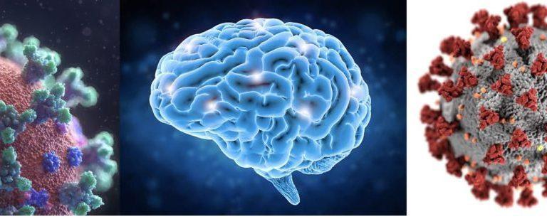 การศึกษาเล่าเรียนภาพสมองแสดงให้เห็นว่าพาร์กินสัน